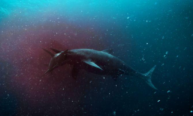 Attenborough And The Sea Dragon Work Hello Charlie